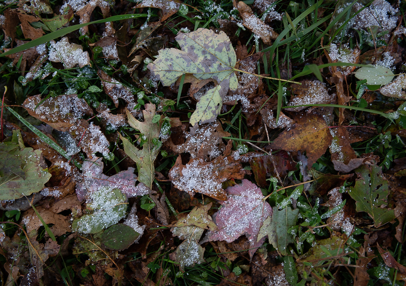 Sleet on fallen leaves - Shenandoah National Park