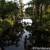 Shingle Creek Regional Park, Kissimmee, Florida - 22 August 2014 (Photographer: Nigel Worrall)