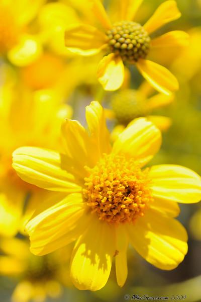 To much yellow in desert...