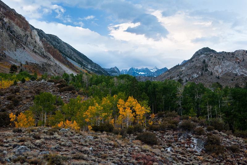 Sierra Autumn<br /> Middle Fork Bishop Creek