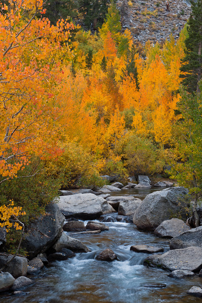 Mountain Gold<br /> Middle Fork Bishop Creek