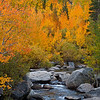 Mountain Gold<br /> Middle Fork Bishop Creek