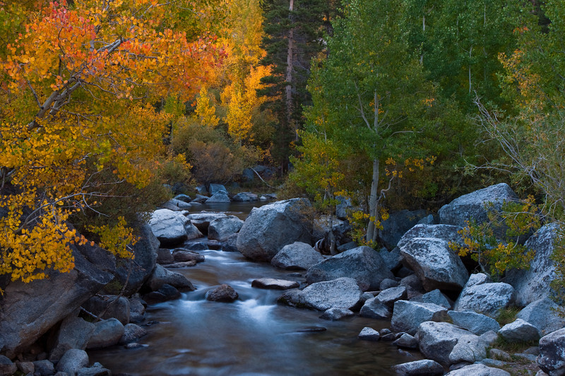 Bishop Creek Autumn<br /> Bishop Creek, Eastern Sierras, California<br /> 2009