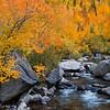 Sierra Gold<br /> Middle Fork Bishop Creek