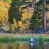 Blue Snag<br /> South Fork Bishop Creek