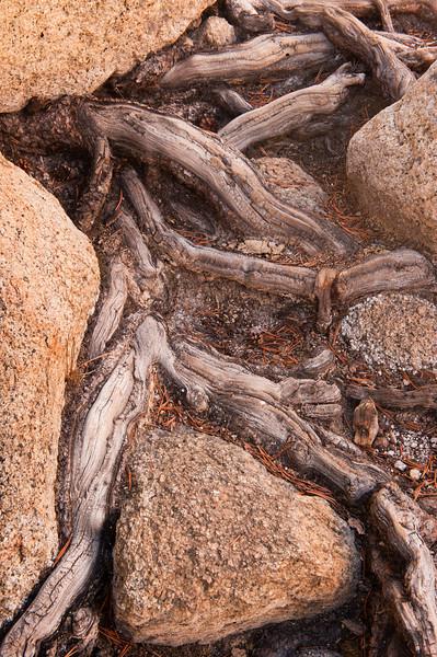 Anchored<br /> Tenaya Lake, Yosemite National Park