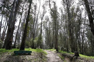 Albany Hill Park