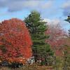Fall colors, Bath, Maine