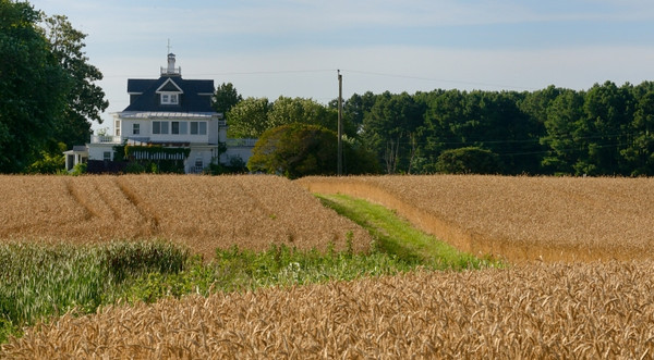 House overlooking wheat field in Reedville, VA.