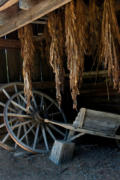 Tobacco drying at George Washington's birthplace.
