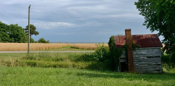 Wheat field on the Chesapeake Bay in Reedville, VA.