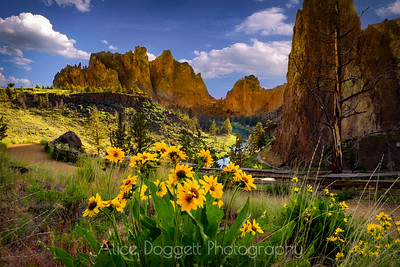 A Touch Of Yellow At Smith Rock, Smith Rock State Park, Central Oregon