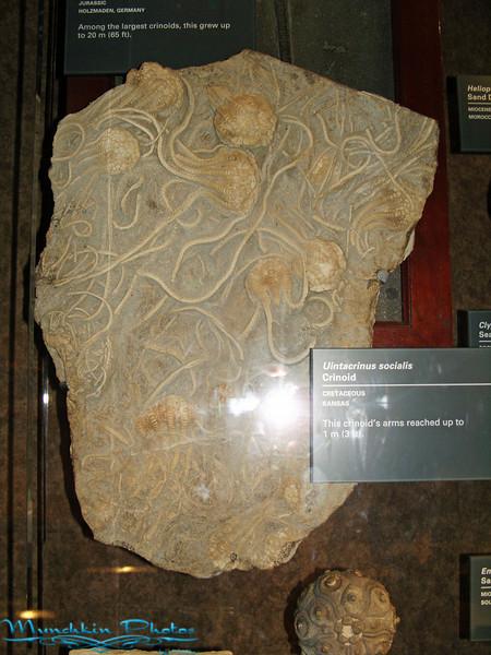 fosilized modern art