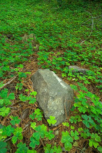 Sorrel and stone,<br /> Garrapata State Park, California