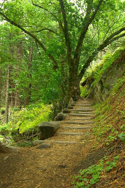 Soberanes Canyon Trail, Garrapata State Park, California