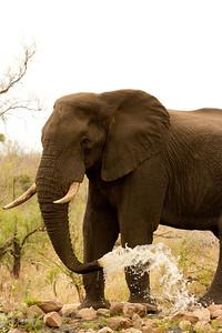 SouthAfrica-116b