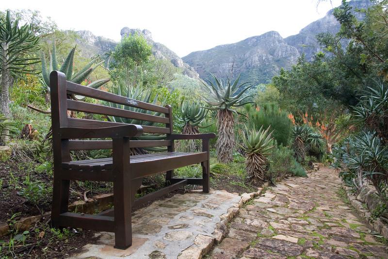 A bench along the path in the Aloe Garden of the Kirstenbosch National Botanical Gardens, Cape Town