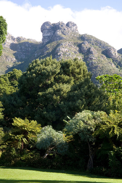 View of Castle Rock from the lawn of the Kirstenbosch National Botanical Gardens, Cape Town