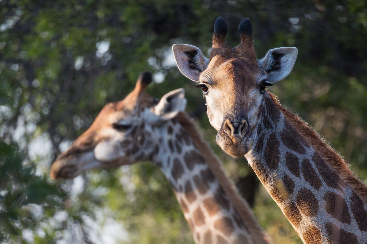 Tall Friends