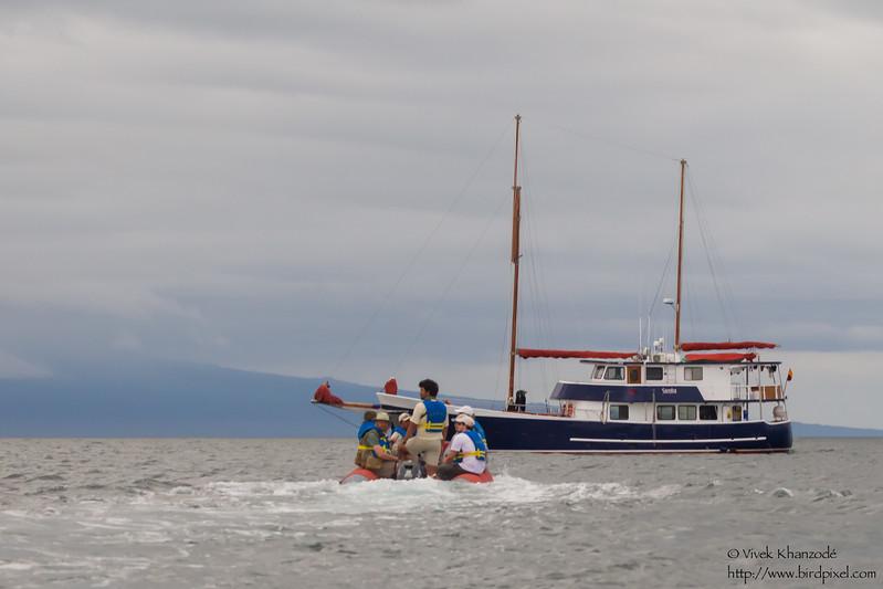 Returning to the Samba - Punta Moreno, Isla Isabela, Galapagos, Ecuador
