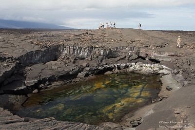Collapsed lava tube - Punta Espinosa, Isla Fernandina, Galapagos, Ecuador