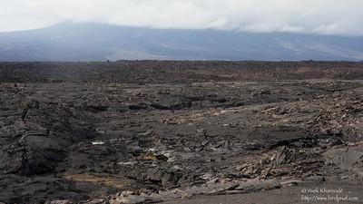 Lava landscape - Punta Espinosa, Isla Fernandina, Galapagos, Ecuador