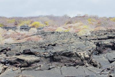 Dried Lava rock - Punta Mejia, Isla Marchena, Galapagos, Ecuador