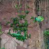 Blue-headed Parrots, Dusky-headed Parakeets, Mealy Amazon