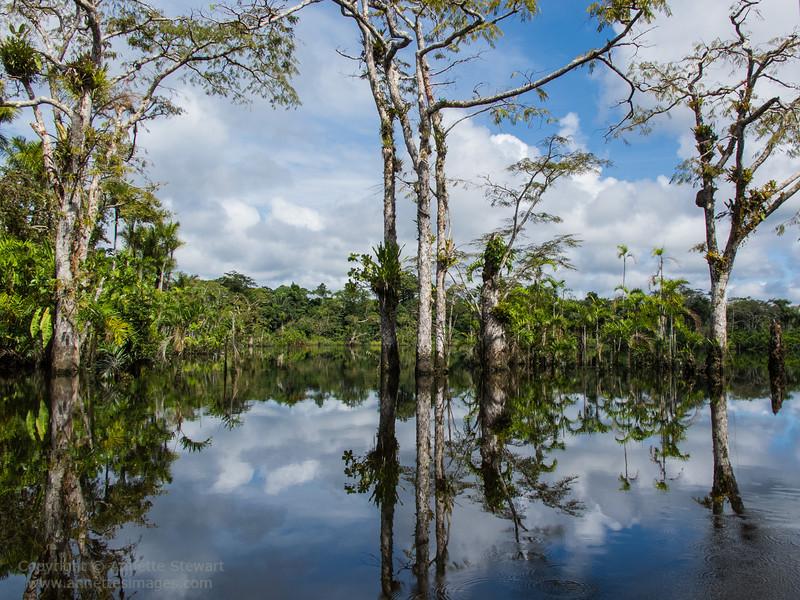 Cocaya River; Cuyabeno Wildlife Reserve