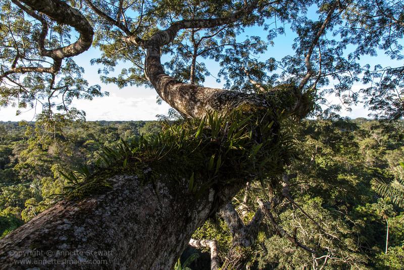 Canopy life