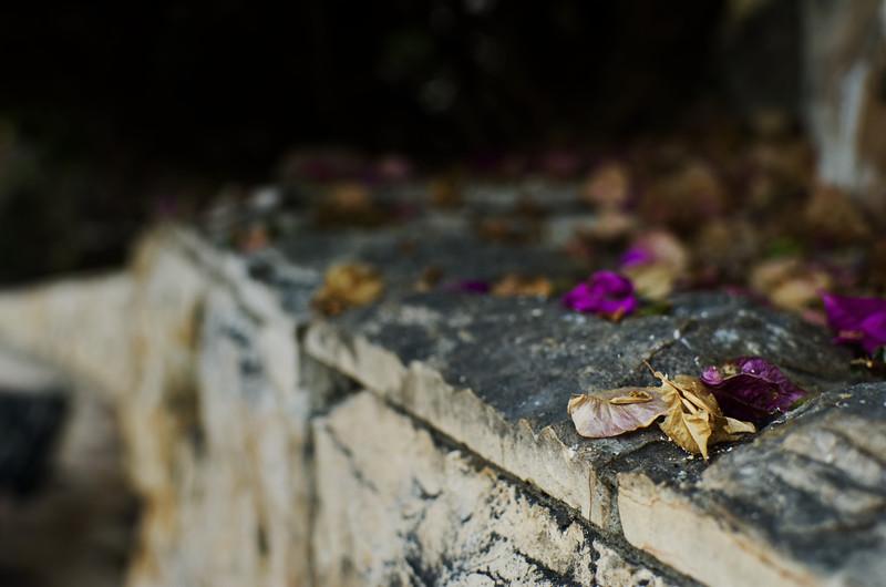 Dried Petals