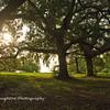 Twin Oaks, SNWR, South Carolina