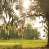 Sun thru Live Oak, SNWR, SC