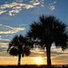 Palms at sunrise, Hilton Head