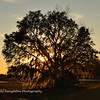 Sunset through live oak SNWR