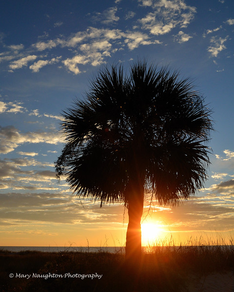 Palm at sunrise, HHI