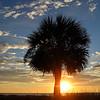 Palm at sunrise, HHI
