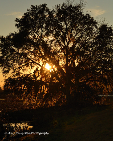 Live oak sunset SNWR