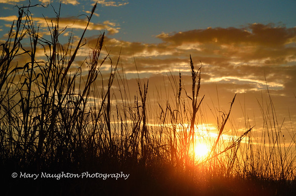 Sunrise through the beach grass, Hilton Head Island
