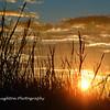 Sunrise through the beach grass, Hilton Head Island