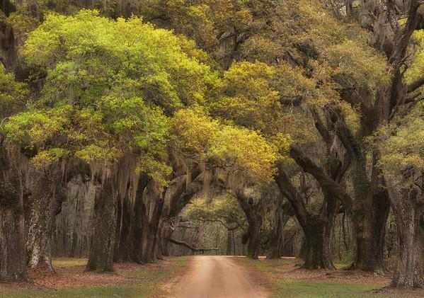 Old Oak Drive_DSC8838