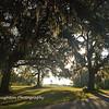 Live Oaks, SNWR, SC