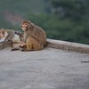 A pair of monkeys sit on a rooftop.
