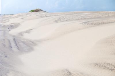 Sand Dunes South Padre Island