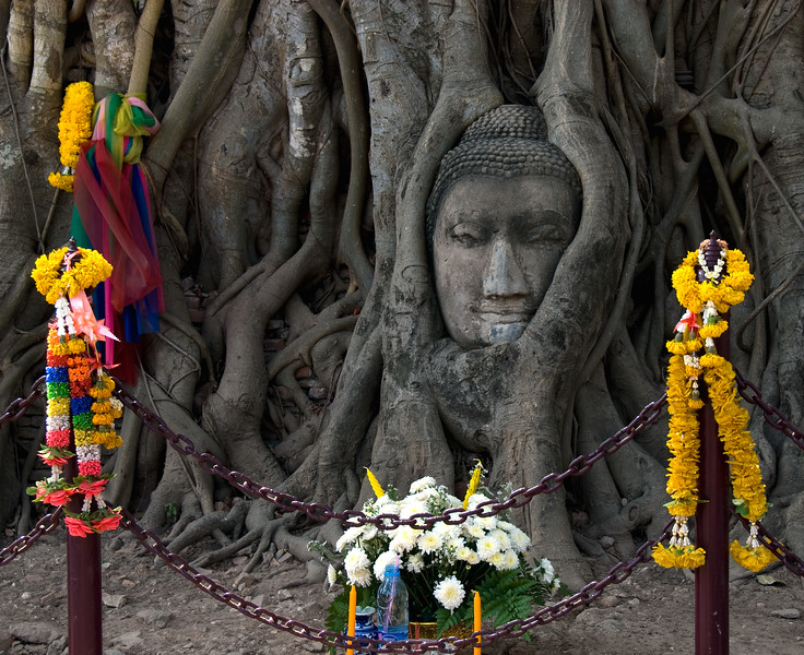 Buddha face inside tree roots with shrine-Wat Mahathat-Ayutthaya-Thailand