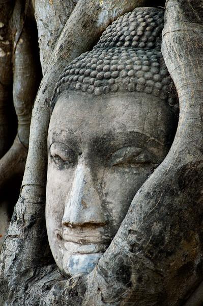 Close up of Buddha face inside tree roots-Wat Mahathat-Ayutthaya-Thailand
