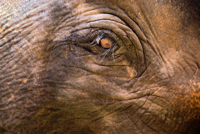 Elephant eye-Thailand