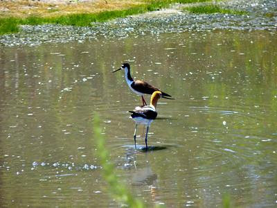 San Joaquin Wildlife Sanctuary, May 2010