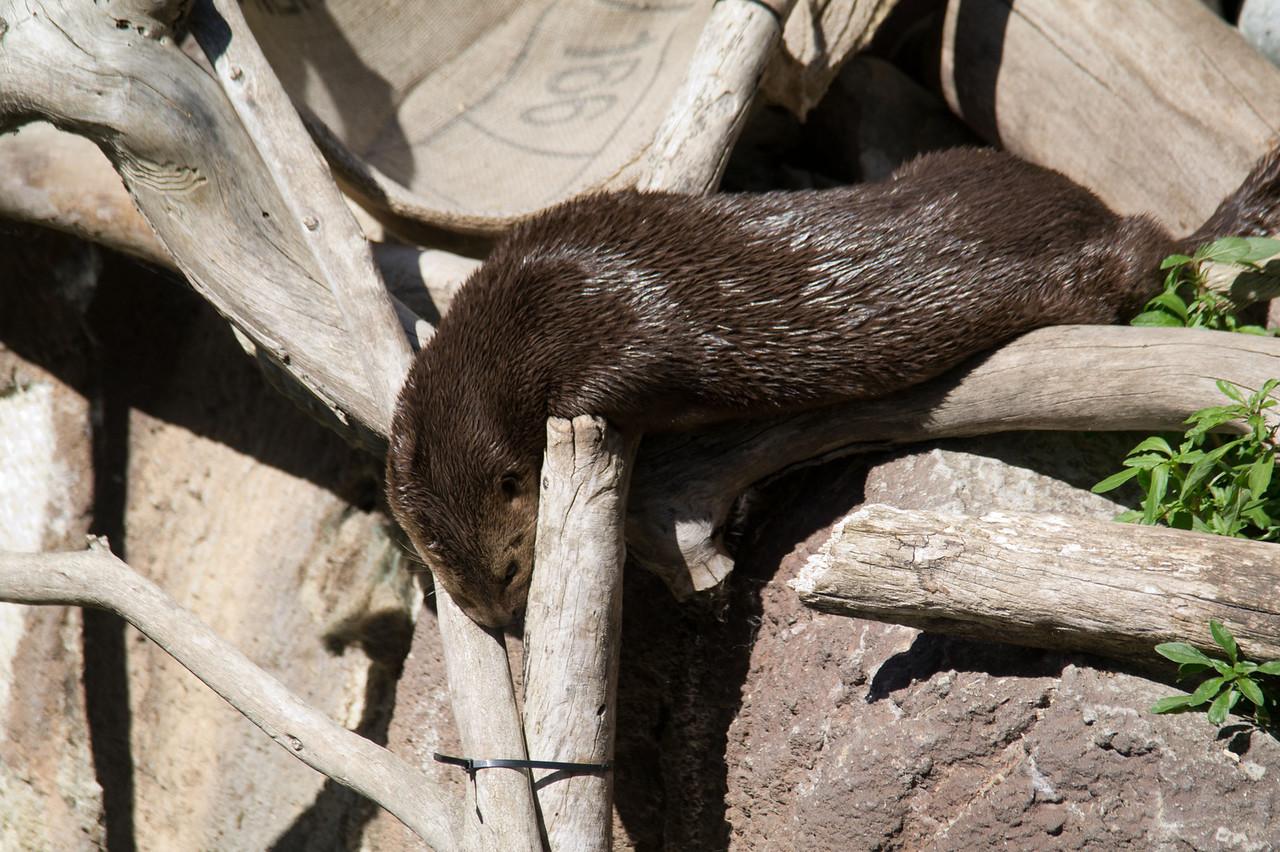 1138 Otter
