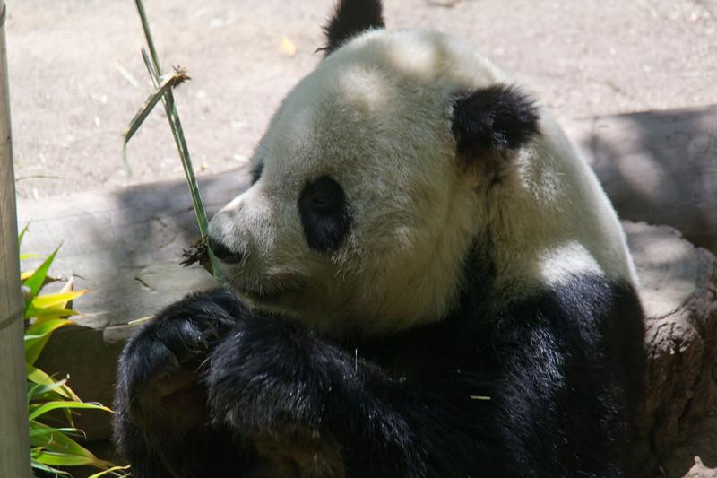 1122 Panda